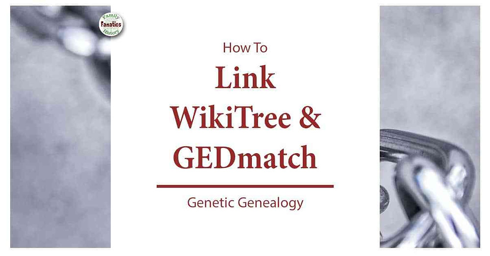 Chain Link with title how to link WikiTree and GEDmatch for Genetic Genealogy