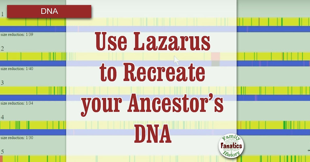 Use Lazarus Tool to recreate your ancestors DNA with chromosome painting