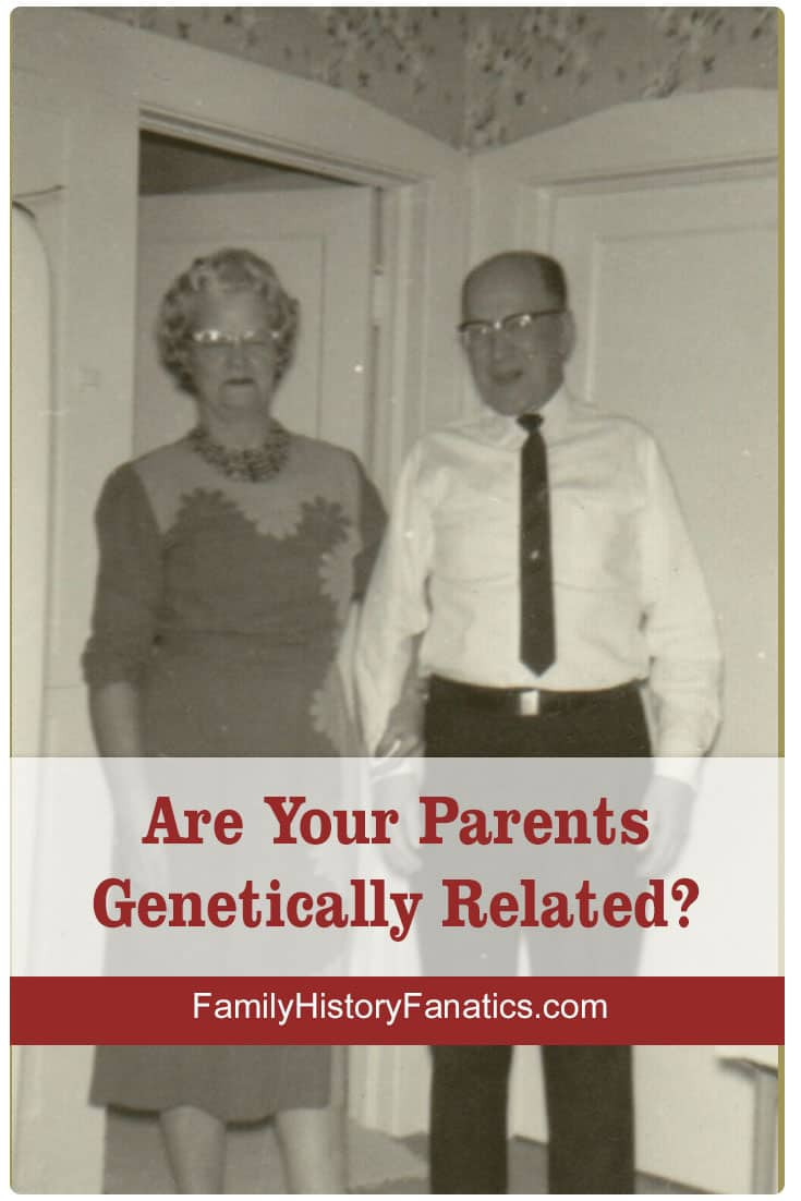 Follow these steps to calculate how much of your parents' DNA you and your siblings have inherited. #genetics #geneticgenealogy #DNA