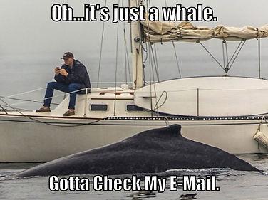 Whale Rv copy.jpg