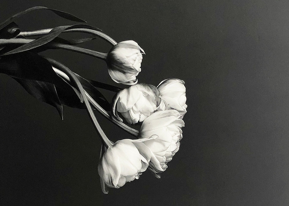 Janet Sirmon Fine Art | Robert Mapplethorpe - Tulips
