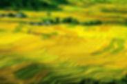 rice-terraces-214725_1280.jpg