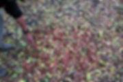 porterenaudlegs2018ATTERRIR-72dpi-7.jpg