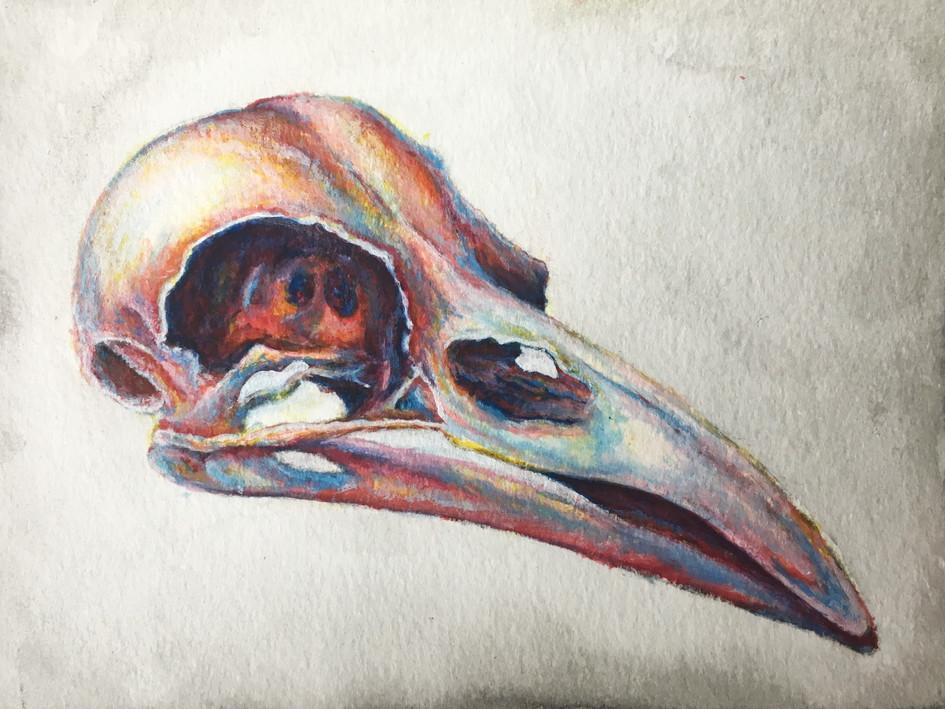 Crow Skull