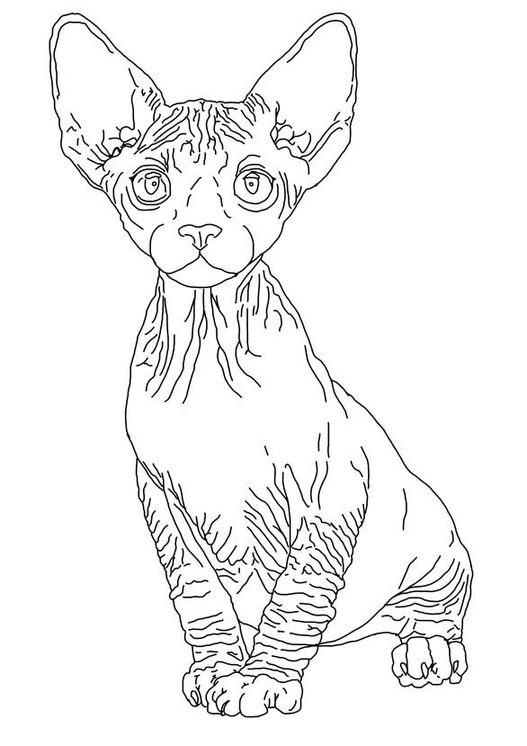 Sphyx Kitten
