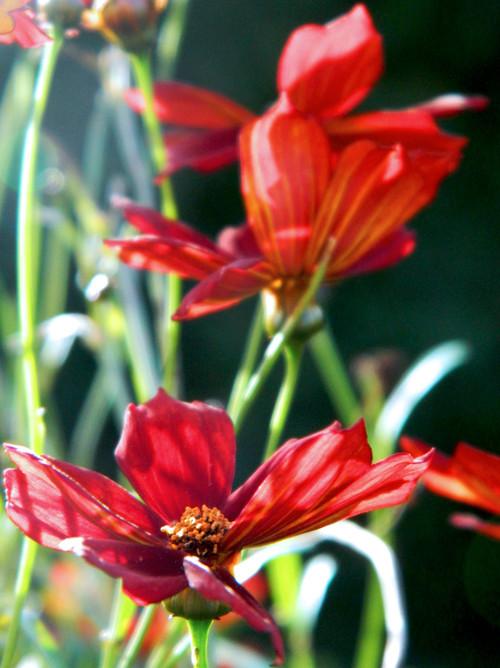 Spring Flowers - 2