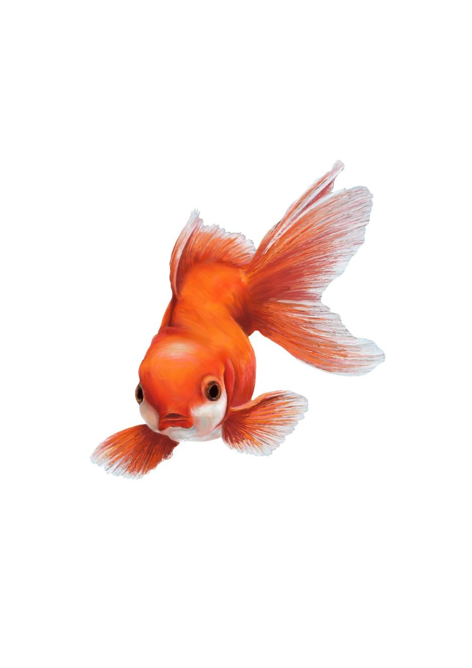 Fish Solo