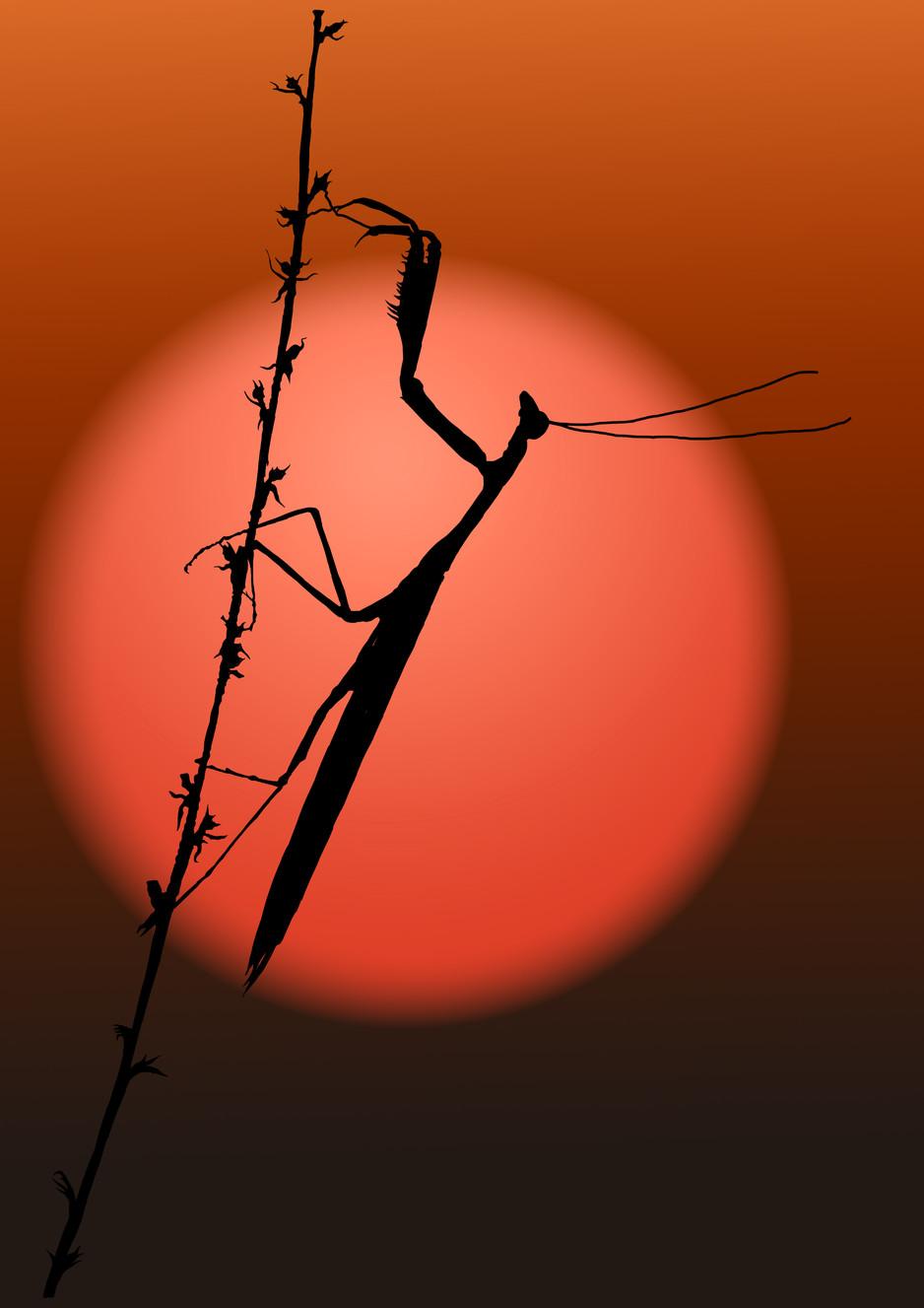 Praying Mantis Sunset