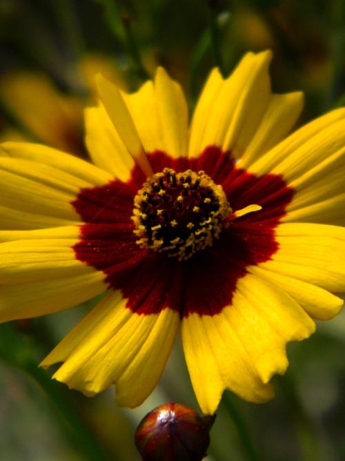 Summer Flowers - 2