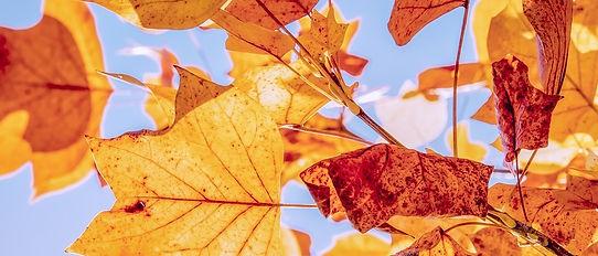 autumn-3763897_960_720.jpg