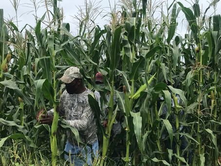 White farmers blocked a much-needed federal relief program for Black farmers.