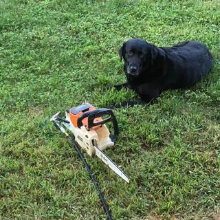 Suzie guarding my favorite saw.