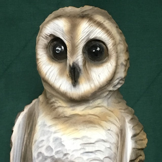 Barn Owl carved in White Pine. Air brushed colors bring it to life.