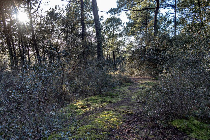 Claude-forêt Olonne-8-100120