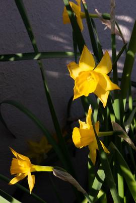 Bernard fleur 2.jpg