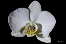 Gilbert fleur.jpg