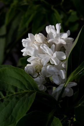 Bernard fleur 3.jpg