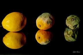 Gilbert citrons.jpg