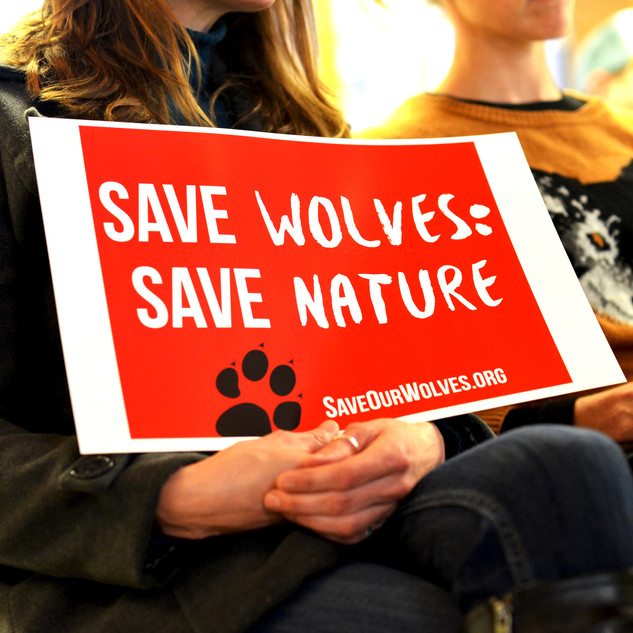 Save The Wolves 26.jpg