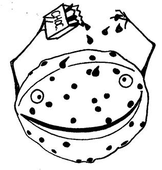 チョコチップメロン