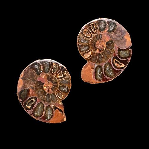 Ammonite Pair •  18.4 gr ~ 34x29x16mm • 59110AMM-18-4   SmokyMountainBeads.com