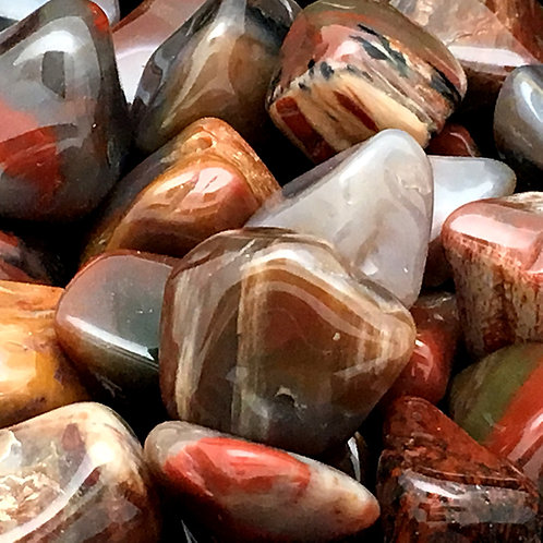 Petrified Wood Tumbles • Arizona • Medium