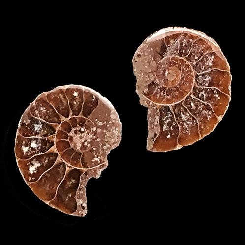 Ammonite Matching Halves • 0.7 grams ~ 14.7x5.6mm