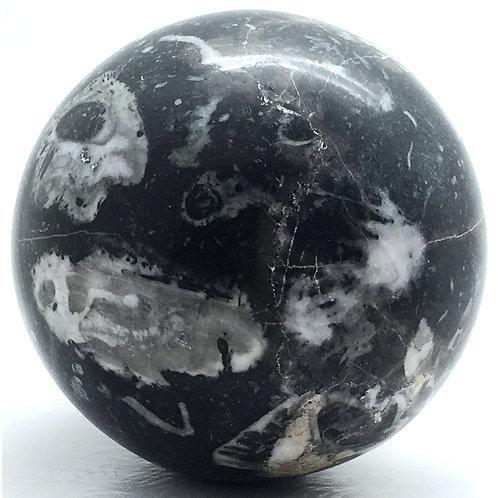Fossil Shell Sphere • Madagascar • 704.3 grams ~ 79.8mm