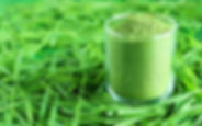 How-To-Make-Wheatgrass-Powder-800x500.jp