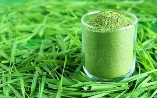 How-To-Make-Wheatgrass-Powder-800x500.jp