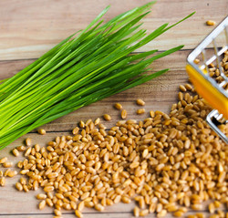 wheatgrass and grain_edited