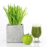 wheatgrass-juice.jpg