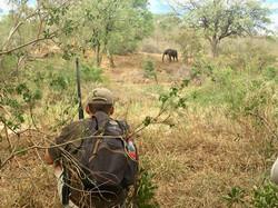 Elephant on foot