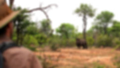 rhino on foot_edited_edited.jpg