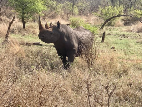 Stories and anecdotes about Black Rhino