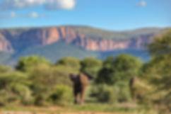 elephant view.jpeg
