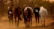 Walking-Horses-e1539072392932_edited.jpg