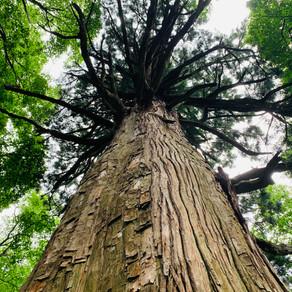 森での時間。五感を研ぎ澄ます時間。
