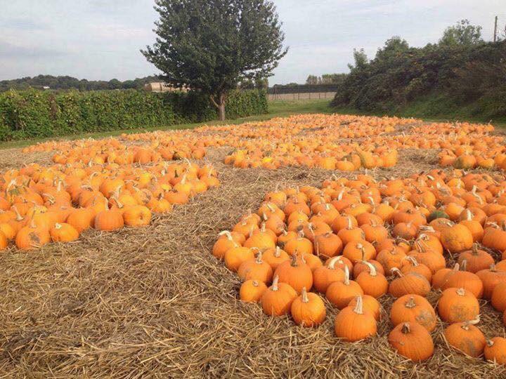 pumpkin patches near London