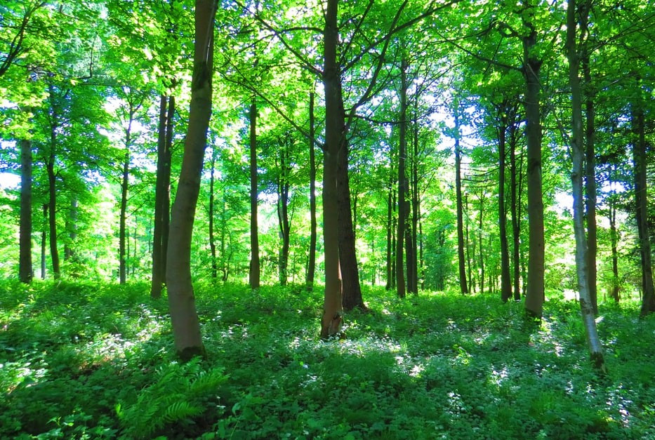 Best country parks and forests in and around London