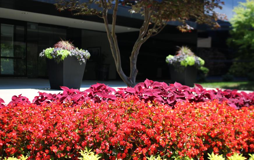 Imperial Center Summer Annuals