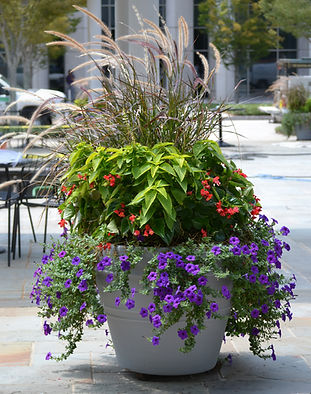 GreenView Flowers, Glenlake Plaza