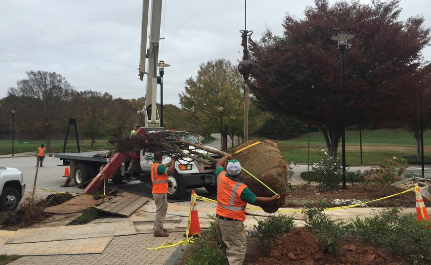Tree Install - Plaza Reno.jpg