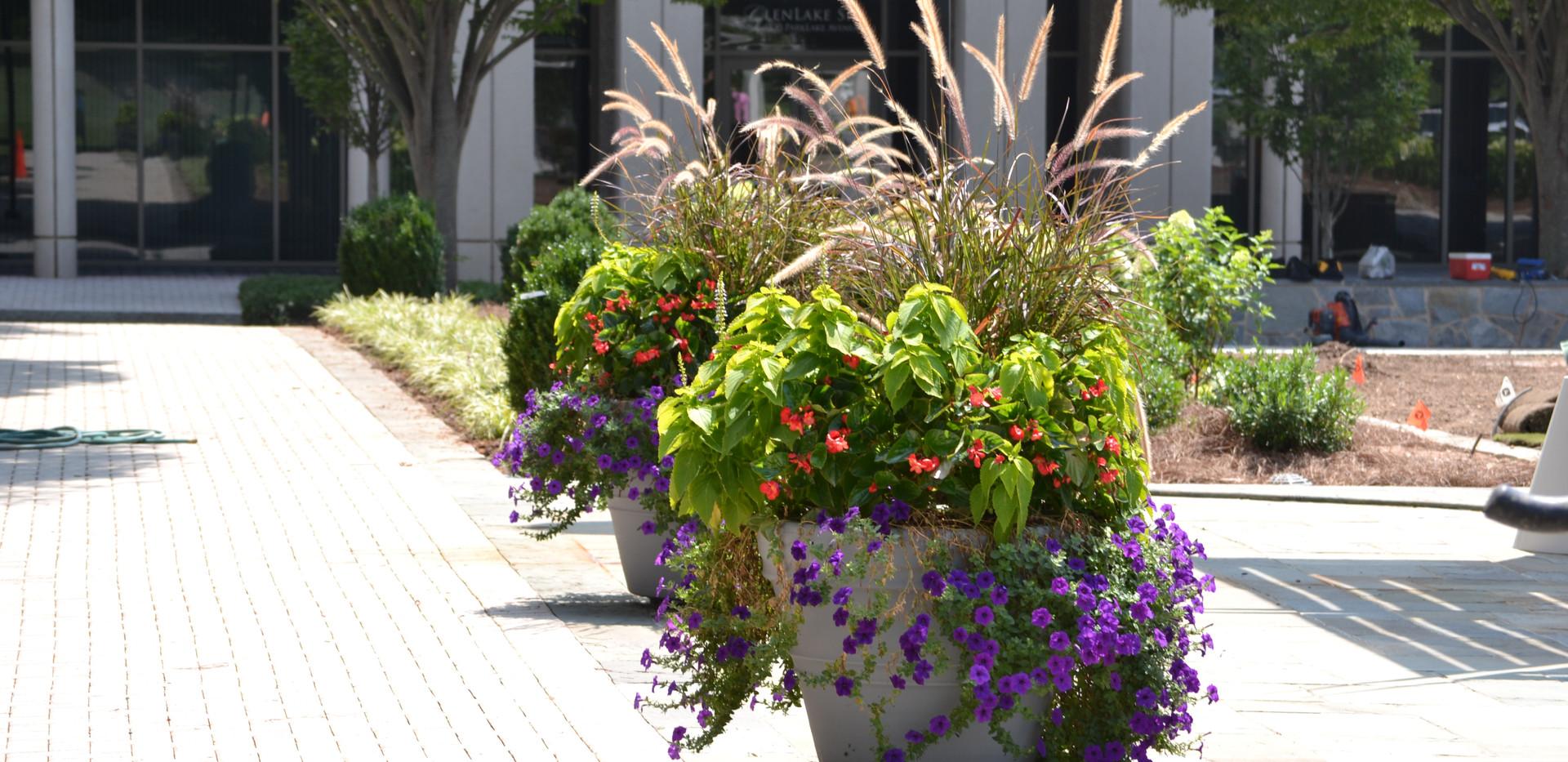 07Glenlake Annual Flowers.JPG