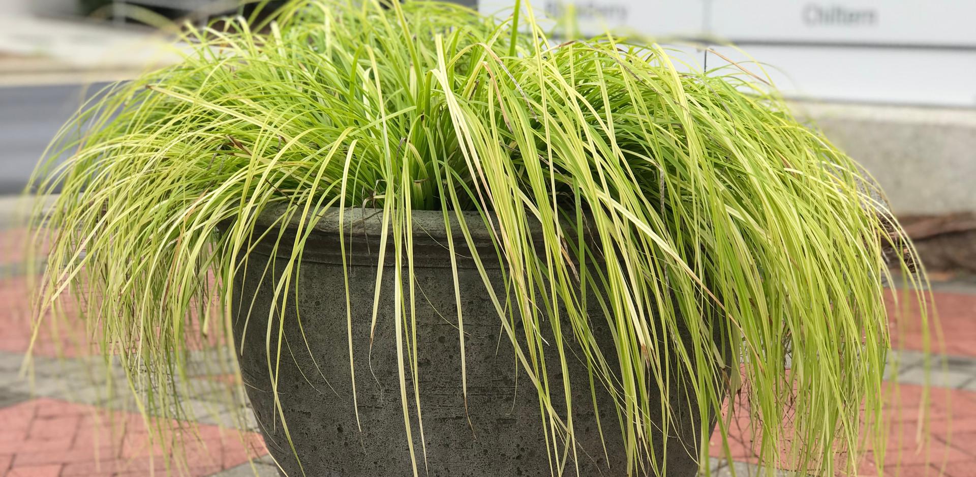 Centregreen - Carex Conversion