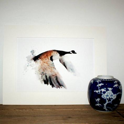 Canada goose print