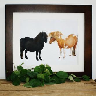 Shetland ponies print