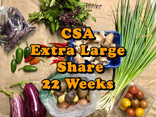 CSA Extra Large Share 22 Weeks