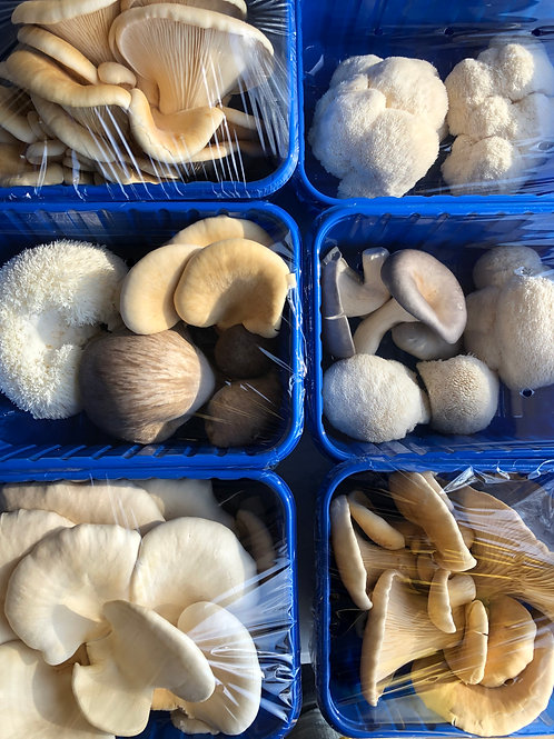 8 Week Mushroom Subscription