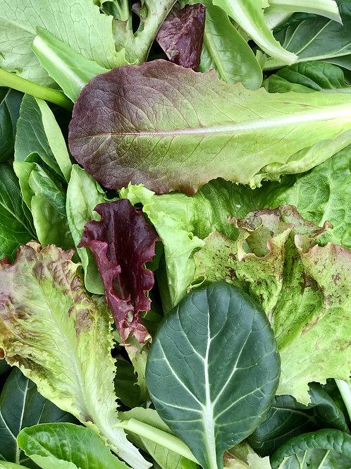 Gourmet Blend Salad Greens